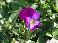 Flower2 (729786037).jpg