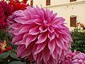 Flower Keshabpur.jpg