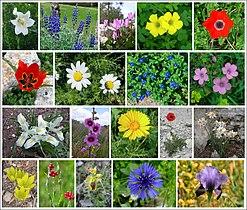 Flowers-of-Israel-ver006
