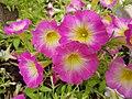 Flowers (43179907822).jpg