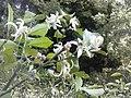 Flowers - Fiori (17524331871).jpg