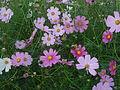 Flowers in Dalat 7.jpg