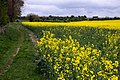 Footpath alongside a rape field near Didcot - geograph.org.uk - 1292128.jpg