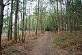 Footpath through Chase Wood - geograph.org.uk - 1272717.jpg
