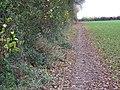 Footpath towards Whiteparish - geograph.org.uk - 1053298.jpg