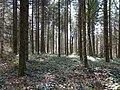 Forêt @ Vaulx (51056408022).jpg