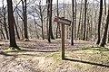 Forêt Départementale de Beauplan à Saint-Rémy-lès-Chevreuse le 14 mars 2018 - 18.jpg