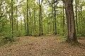 Forêt Départementale de Méridon à Chevreuse le 29 septembre 2017 - 34.jpg