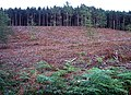 Forest Clearance, Sherwood Pines - geograph.org.uk - 64646.jpg