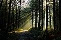 Forest Sunlight (6781013929).jpg