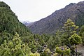 Forest near Pisang - Annapurna Circuit, Nepal - panoramio.jpg