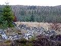 Forestry land near Loch Dubh - geograph.org.uk - 628073.jpg