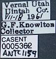Formica canadensis casent0005362 label 1.jpg