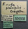 Formica planipilis casent0103375 label 1.jpg