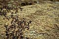 Formigas de Ibitipoca - Minas Gerais.jpg