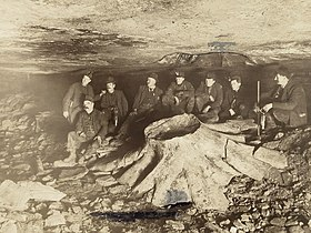 Fossil tree stump in coal mine.JPG
