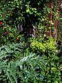 Front garden - Flickr - peganum (20).jpg