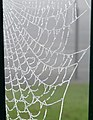 Frozen Web detail - geograph.org.uk - 1063449.jpg