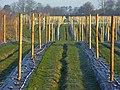 Fruit-farming, Wargrave - geograph.org.uk - 710390.jpg