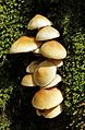 Fungi in Romania.jpg