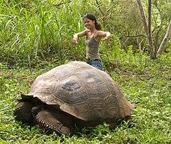 GalapagosTortoise+Pam.jpg