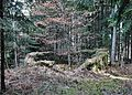Galgenbühel (1).JPG