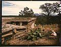Garden adjacent to the dugout home of Jack Whinery, homesteader. Pie Town, New Mexico, September 1940.jpg