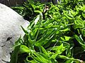 Gardenology.org-IMG 0563 rbgs10dec.jpg