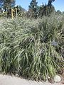Gardenology.org-IMG 2410 hunt0903.jpg