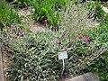 Gardenology.org-IMG 2806 rbgs11jan.jpg