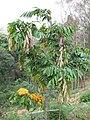 Gardenology.org-IMG 7335 qsbg11mar.jpg