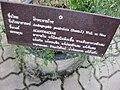 Gardenology.org-IMG 7877 qsbg11mar.jpg