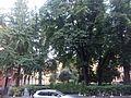 Gardens of piazza Cavour, Bologna.jpg