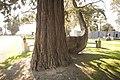 Glasnevin Cemetery - (442807593).jpg