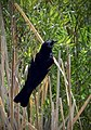 Glossy Black (9152266257).jpg