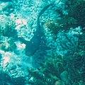 Glover's Reef 2-14 (33142045052).jpg