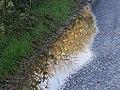 Golden Puddle, Trenewydd Lane, Llanteg - geograph.org.uk - 1051036.jpg