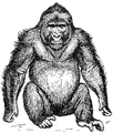 Gorilla 2 (PSF).png