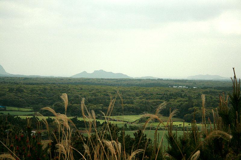 Bestand:Gotjawal Forest on Jeju Island-01.jpg