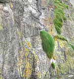 Grasses on high (8045670341).jpg