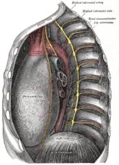 Subcostal vein (Vena subcostalis) | Kenhub