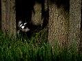 Great Spotted Woodpecker 1.jpg