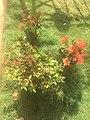 Green Grass with flowers.jpg
