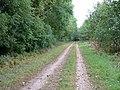 Green Lane beside Headon Plantation - geograph.org.uk - 1507035.jpg