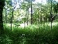 Greenery at KBR Park 1.jpg