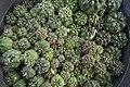Greenhouses in qom عکس های گلخانه دنیای خار در روستای مبارک آباد قم 11.jpg