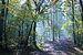 Grimbosq forêt1.JPG