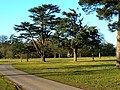 Grounds, Westonbirt House, Tetbury - geograph.org.uk - 1105184.jpg