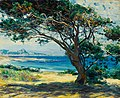 Guy Rose - Wind swept pines.jpg