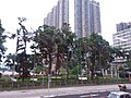 HK Bus 111 tour view WC Hung Hom Hong Chong Rd Chatham Road Ma Tau Chung Kok May 2019 SSG 16.jpg
